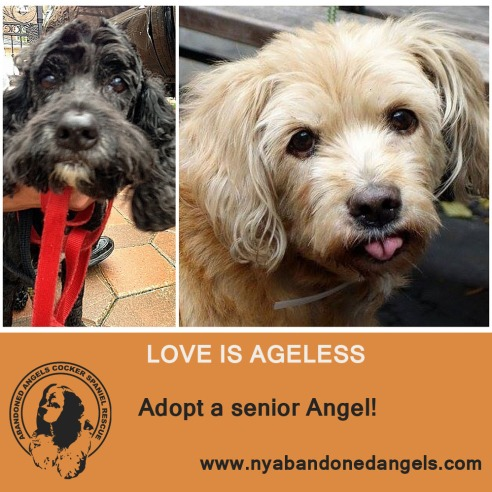Adopt a Senior Angel_text rasterized